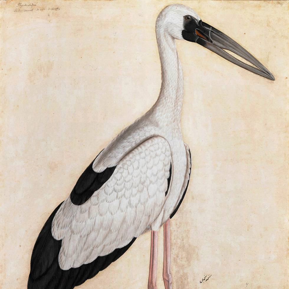 Unknown Artist Asian Openbill Stork in a Landscape_Courtesy Private Collection CROPPED.jpg
